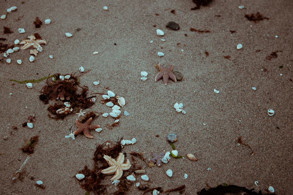 Muscheln und Seesterne